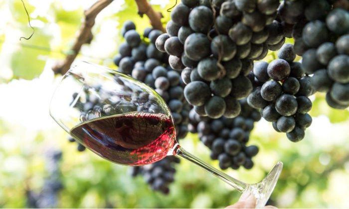 Toerggelen Wein